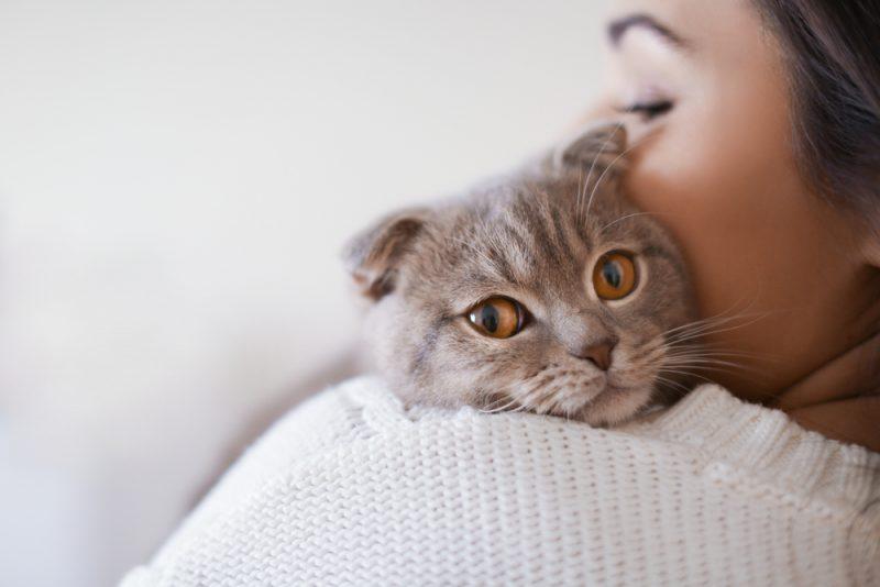 愛猫が帰ってこないと思ったら、よその家で飼われていた!取り返してもらえる?