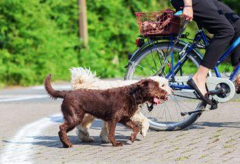 危ない!自転車を乗りながらの犬の散歩、これって法律的に問題ないの?