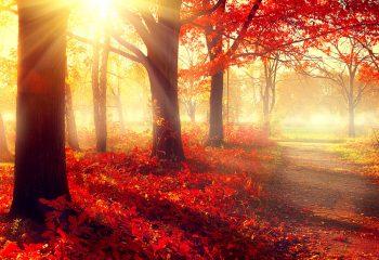 いつが見頃? 今度の休みはお得な切符で秋を探しに紅葉ツアーにでかける!