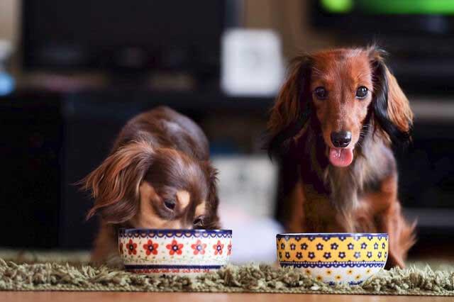 ペットも大事な家族! だからこそ気をつけたい食事の選び方
