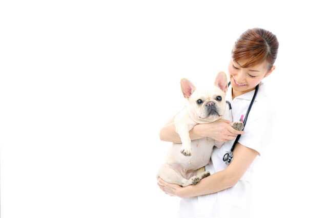 人の4倍のスピードで歳をとっていく犬と猫の定期健康診断 年に何回行うべき?費用は?