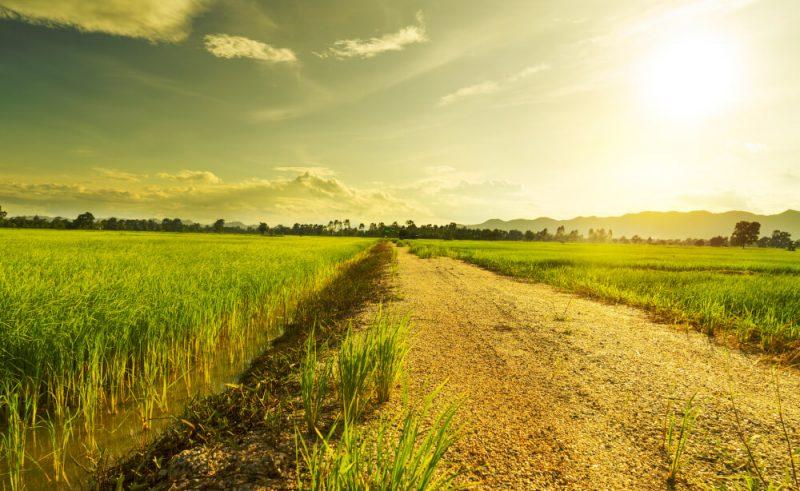 長年放置された土地が増加! 土地の相続登記が行われない理由