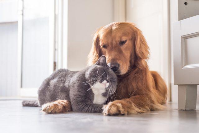 「ペット保険」って必要?小さな家族の緊急事態にかかるお金とは