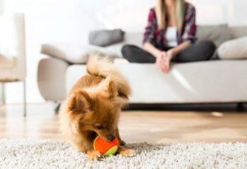 約40%のマンションがペット飼育を禁止している理由