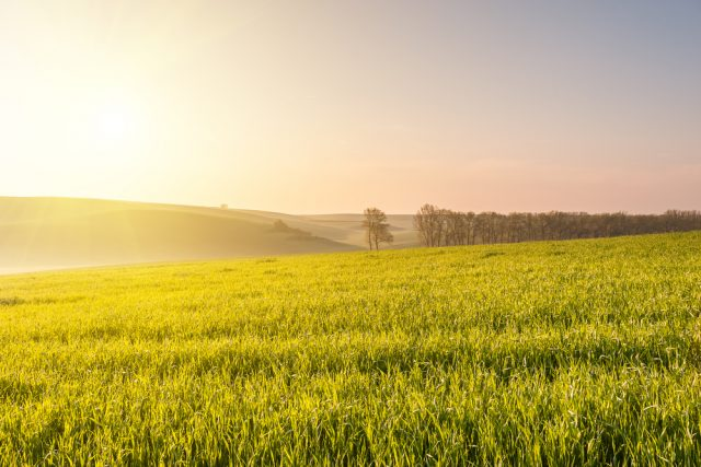 「週末農業」で副収入?人手不足の農家でお手伝い。受粉など初心者でもできる作業も