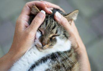 いざという時にしっておきたい、犬や猫の治療費はいくらが相場?