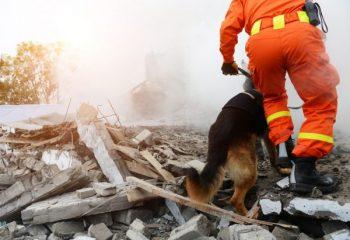 自然災害時の税制上の救済措置とは?活用する方法を解説
