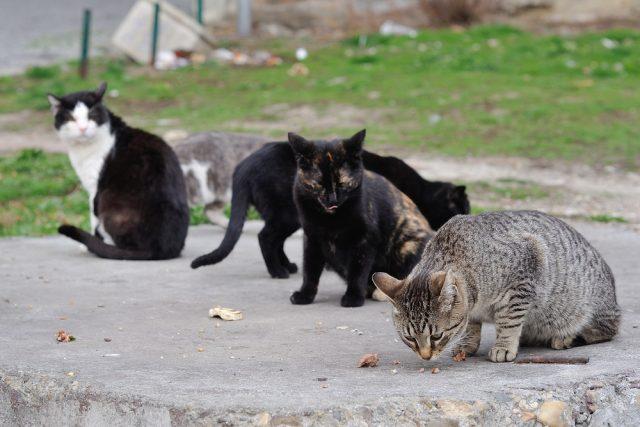 猫を飼わない人も知っておくべき、野良猫が減らない理由って?