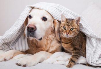ペット保険には入った方がいい? かわいい家族のために知っておきたいこと