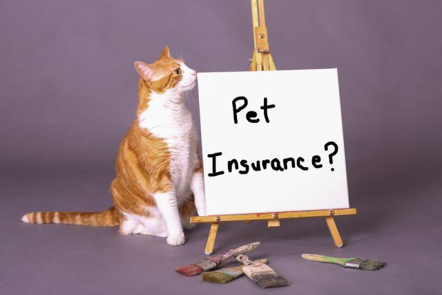 小さいけれど、意外に複雑なのペット保険。選び方教えます