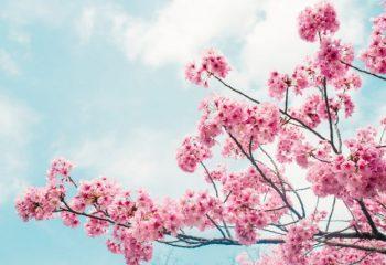 旬の返礼品 春におすすめのふるさと納税