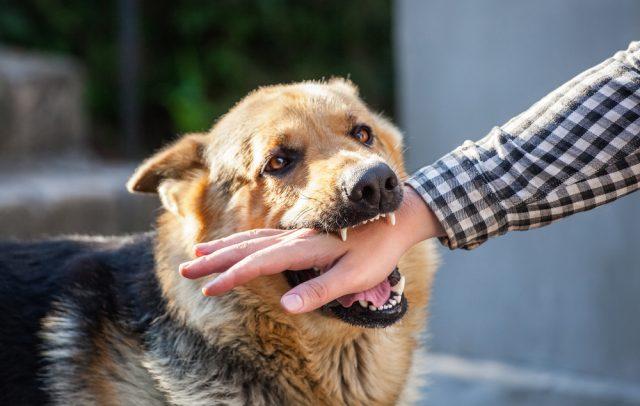 どうしよう、愛犬が隣人にかみついた!どんな法的責任が生じる?