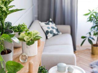 癒やしを求めて植物を購入する人が増えている? どんな植物が人気なの?